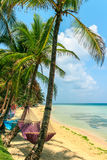Tropical beach with hammock on palm Stock Photography
