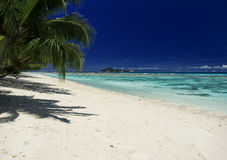 Tropical beach with hanging palm trees. View of the Sea Stock Images