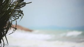 Tropical beach with heavy waving palm trees in a storm in front of a raving sea and changes focus from blurred. Tropical beach with heavy waving palm trees in a stock footage