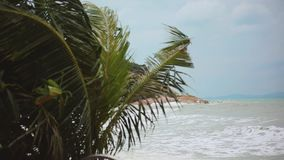 Tropical beach with heavy waving palm trees in a storm in front of a raving sea and changes focus from blurred. Tropical beach with heavy waving palm trees in a stock video footage