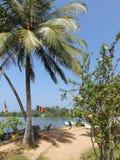 Tropical beach in Hikkaduwa. Sri Lanka. Tropical beach with palms in Hikkaduwa. Sri Lanka Royalty Free Stock Image