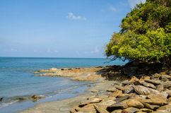 Tropical beach. . Royalty Free Stock Image