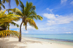 Free Tropical Beach In Mauritius Royalty Free Stock Photos - 89008118