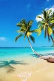 Tropical beach, Kood island, Thailand. Tropical beach with palms, Kood island, Thailand Stock Images