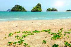 Tropical beach in Krabi province Stock Image