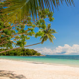 Tropical beach landscape with a leaning palm tree Royalty Free Stock Photography