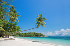 Tropical beach with a leaning palm tree Royalty Free Stock Photo