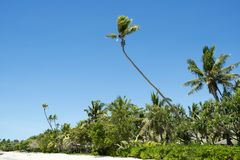 Tropical beach with lush vegetationLomani, Fiji Royalty Free Stock Images