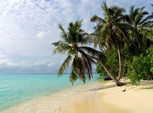 Tropical beach on the Maldives Royalty Free Stock Photo