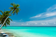 Tropical beach. On the maldives Stock Photography