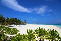 Tropical beach in Maldives with few palm trees and blue lagoon Stock Photos