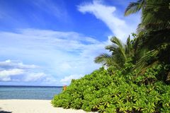 Tropical beach. On Maldives in the Indian Ocean stock photo