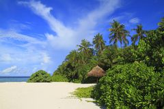 Tropical beach. On Maldives in the Indian Ocean royalty free stock image