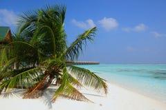 Tropical beach at Maldives , Meeru island Stock Image