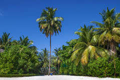 Tropical beach, Maldives Royalty Free Stock Photography