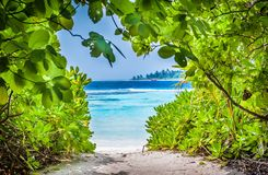 Tropical beach in Maldives.Tropical Paradise at Maldives with palms, sand. And blue sky Royalty Free Stock Image