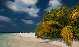 Tropical beach in Maldives.Tropical Paradise at Maldives with palms, sand and blue sky Stock Images