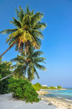 Tropical beach in Maldives.Tropical Paradise at Maldives with palms, sand and blue sky.  Stock Photography