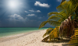 Tropical beach in Maldives.Tropical Paradise at Maldives with palms, sand and blue sky Stock Photo