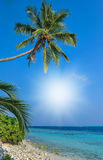 Tropical beach in Maldives.Tropical Paradise at Maldives with palms, sand and blue sky.  Royalty Free Stock Photos