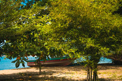 Tropical beach with many trees bamboo and boat Stock Images