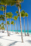 Tropical beach near tourist resort Royalty Free Stock Images