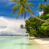 Tropical beach. Nobody. View of paradise tropical beach with coconut palms royalty free stock images