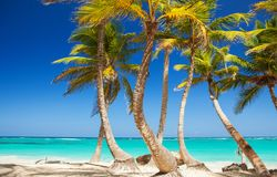 Tropical beach. Ocean and palmtrees background. White sand and crystal-blue sea. Ocean water nature, beach relax. Summer sea vacation. Caribbean beach Stock Photography