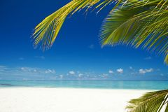 Tropical beach. Ocean and palmtrees background. White sand and crystal-blue sea. Ocean water nature, beach relax. Summer sea vacation. Caribbean beach Stock Images