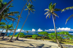 Tropical beach and ocean on Samoa Island with palm trees during Stock Images