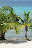 Tropical Beach Ocean Stock Photo