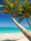Tropical beach. Ocean waves, blue sky and palm trees background Royalty Free Stock Photo