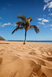 Tropical beach with a palm Royalty Free Stock Images