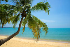 Tropical Beach Palm Royalty Free Stock Images