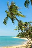 Tropical Beach Palm Stock Photos