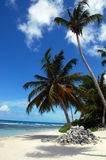 A tropical beach with a palm Stock Photo