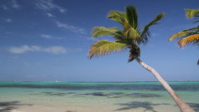 Tropical beach with palm. Tropical beach with coconut palm and white sand, Dominican Republic stock footage