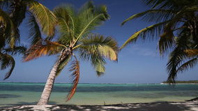 Tropical beach with palm. Tropical beach with coconut palm and white sand, Dominican Republic stock video