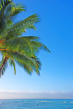 Tropical beach with palm - fine background Royalty Free Stock Photo
