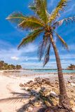 Tropical beach and palm in Isla Mujeres, Mexico Stock Photos