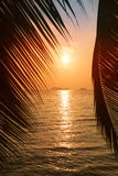 Tropical beach with palm leaf. Silhouette on sunset Royalty Free Stock Photo