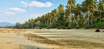 Tropical beach with palm at low tide Royalty Free Stock Photo