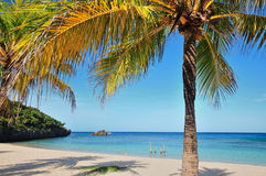 Tropical Beach with Palm Tree. White sands and blue ocean of a tropical beach with a lone palm tree Royalty Free Stock Photo
