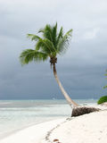 Tropical beach and palm tree Stock Photos