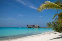 Tropical Beach with Palm Tree. Beautiful Island of Maldives, Natural alwasy Stock Photo