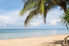 Tropical beach ,  palm tree Royalty Free Stock Images