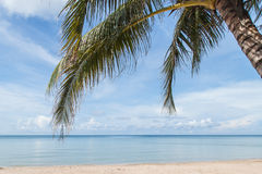 Tropical beach , palm tree Stock Images