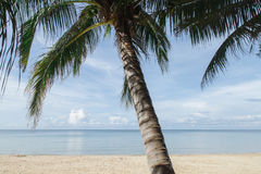 Tropical beach, palm tree Royalty Free Stock Images