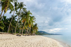Tropical beach with palm tree against cloudy sky. Tropical beach with palm tree against sky Stock Image