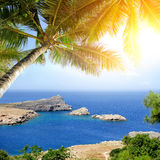 Tropical beach with palm tree Royalty Free Stock Photos